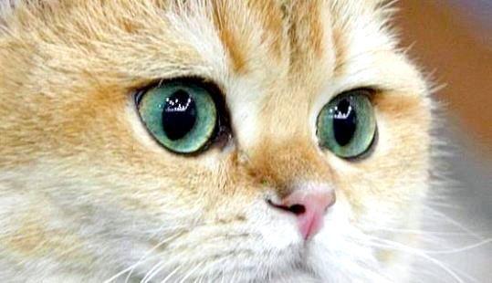 Кошеня з великими очима