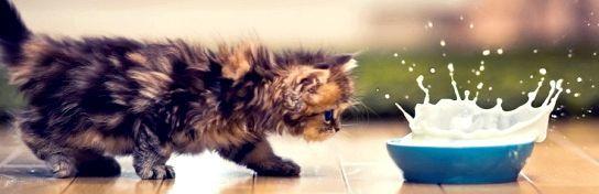 Кіт і миска молока