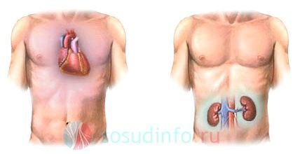 ускладнення на нирки - характерний прояв застійної форми ХСН