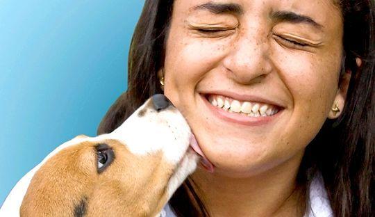 Поцілунок собаки