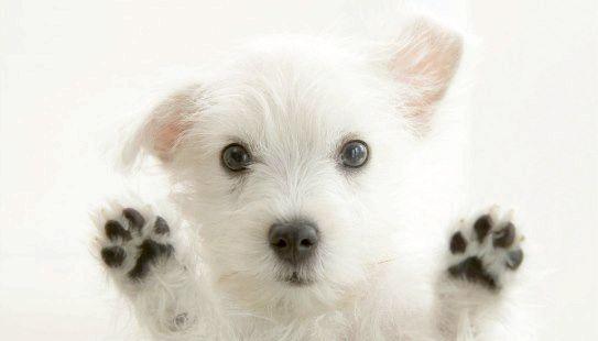 Милий щеночек