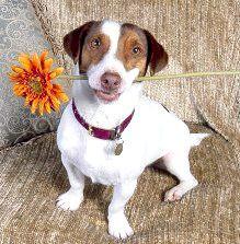 Собака з квіткою