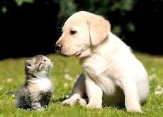 Собака і кошеня