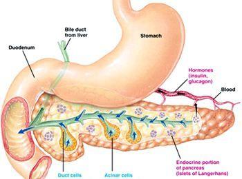 Стеатоз підшлункової залози (липоматоз)
